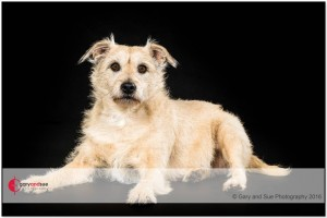 Pet dog photographers Cardiff South Wales