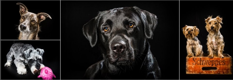 dog photographers Cardiff