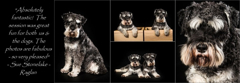 Pet photographers Cardiff South Wales Gary and Sue Photography a few lovely Art images of pet dogs
