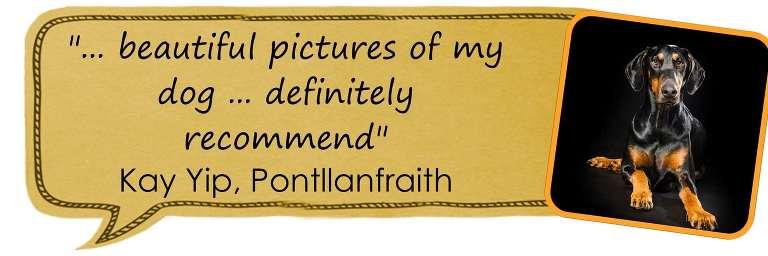 Testimonial Cardiff Pet Photographer